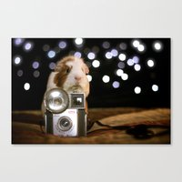 guinea pig Canvas Prints featuring Guinea Pig Photographer  by The Wheekly