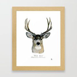 Mule deer Framed Art Print