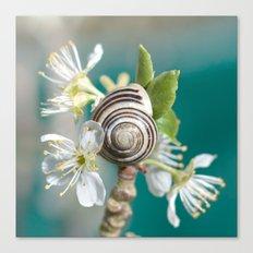 sea snail Canvas Print