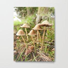 Psathyrella Sextet Metal Print