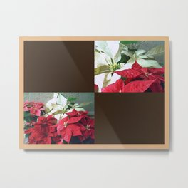Mixed color Poinsettias 3 Blank Q3F0 Metal Print