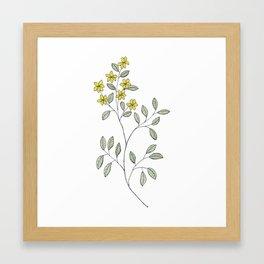 Jasmine Flowers Framed Art Print