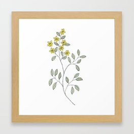 Jasmine Flowers Framed Art Print