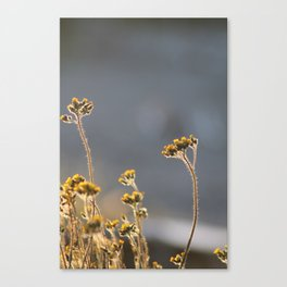 Light shines from the inside out Canvas Print