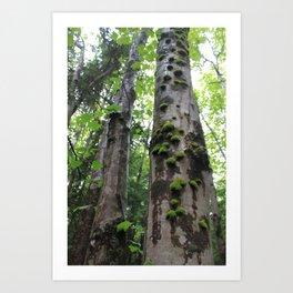 Forest woes, Mt Katahdin Art Print