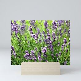 Lavender Plant Mini Art Print
