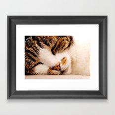 Sleepy Cat Framed Art Print