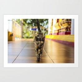 Fierce Kitty Art Print
