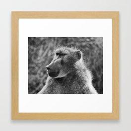 Baboon 2 Framed Art Print