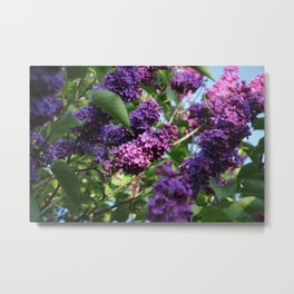 The Smell of Lilacs Metal Print