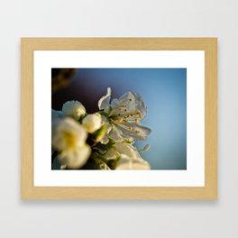 Frosted blossom Framed Art Print