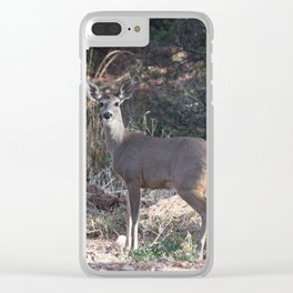 Deer in Tonto Natural Bridge State Park Clear iPhone Case