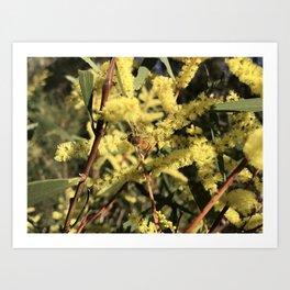 Wattle & Bee Art Print