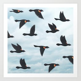 red-winged blackbirds and blue sky Art Print