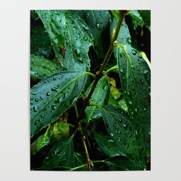 Greenery and leaf I Poster