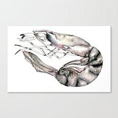 Planetary Shrimp Canvas Print