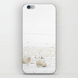 Icelandic Sheep II iPhone Skin