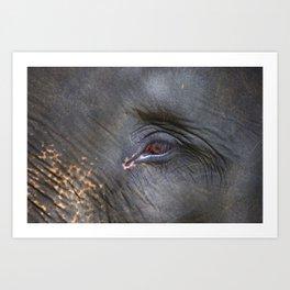 Elephant in Bali Art Print