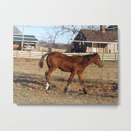 Photography - Horse 2 Metal Print