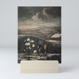 The Snowdrops from The Temple of Flora (1807) by Robert John Thornton. Mini Art Print