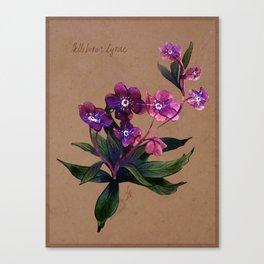 Helleborus lyrae Canvas Print