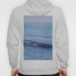 Tropical whale: The Bryde´s whale Hoody