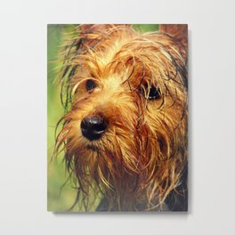 Adorable Terrier Dog with a Wet Face Metal Print