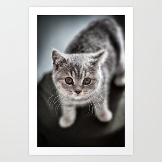 Wimpole the British Shorthair cat Art Print