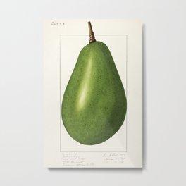 Avocado (Persea) (1916) by Amada Almira Newton. 4 Metal Print