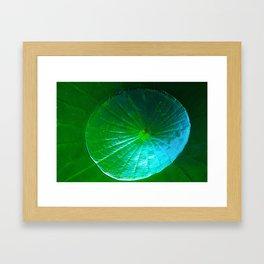 Lillypond Framed Art Print