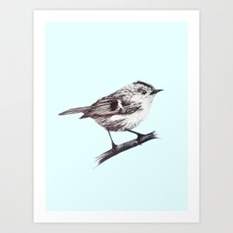 Rock wren - centred Art Print