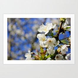 Blossoms in the Sun Art Print