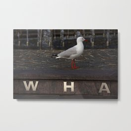 """Silver gull on """"Wharf"""" sign at Darling Harbor, Sydney Metal Print"""