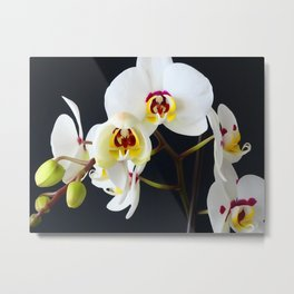 White Orchid WC Metal Print