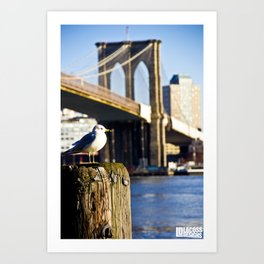 Seagull Under Brooklyn Bridge Art Print