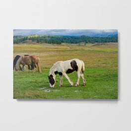 Gypsy Vanner Filly 5506 - Colorado Metal Print