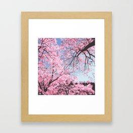 High Park Bloom Framed Art Print