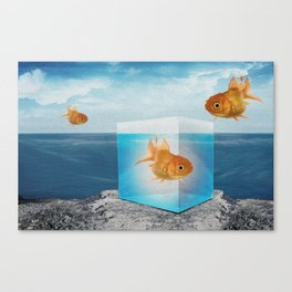 Horatio by the Sea - Goldfish Canvas Print