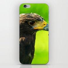Haryer hawk iPhone & iPod Skin