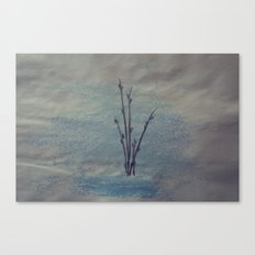 Pussy Willows Canvas Print