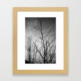 Shadow Twigs Framed Art Print