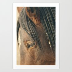 Wild Mustang Art Print