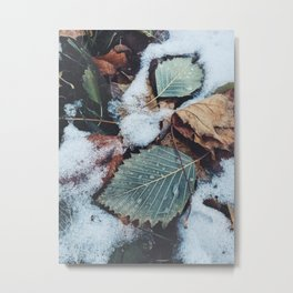 First Frost of Winter Metal Print