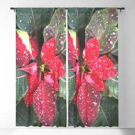 Raindrops on a poinsettia Christmas flower Blackout Curtain