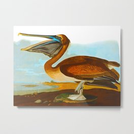 Brown Pelican Illustration Metal Print