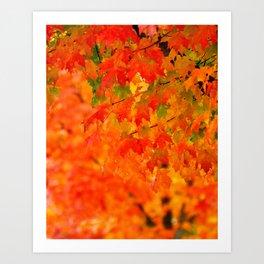 VIVID ORANGE MAPLE TREE FALL LEAVES Art Print