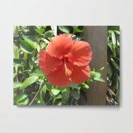 Large Red Hibiscus Flower Metal Print
