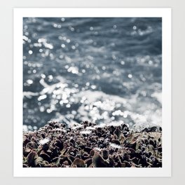 Ice plants on California coast Art Print