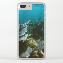 Mexican Caribbean Sealife Clear iPhone Case
