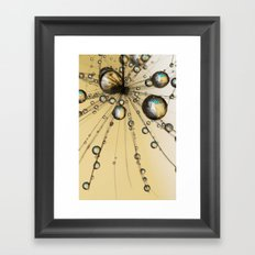 Single Dandy Seed Web Drops Framed Art Print